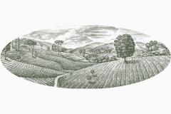 Tea_Fields