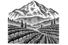 Terrain-Vineyards-art-