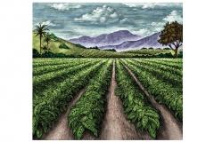 Tobacco_crops