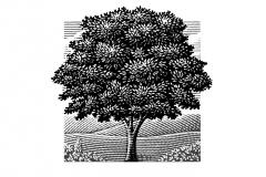 Tree_Landscape