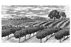 Vineyard Scene 2