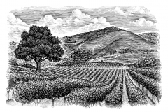 Vineyard Valley