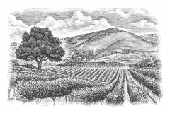 Vineyard-art
