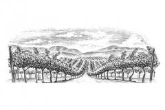 Vineyard-rows-3