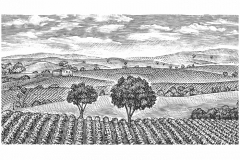 Vineyard-scene