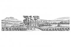 Vineyard_Rows
