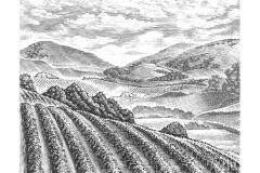 Vineyard_Valley