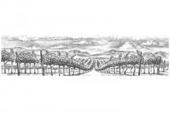 Vineyard_rows_2