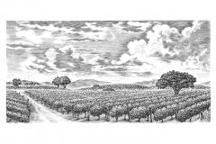 Vineyards_Valley
