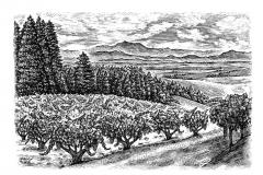 Wilson Growers