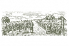 Wine Harvest-