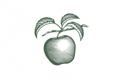 Apple_Woodcut