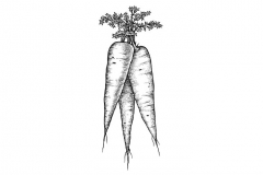 Carrots-art_001