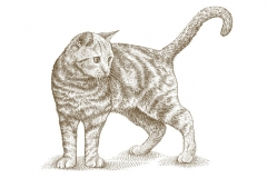 Cat-WSJ-style-art1