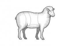 Lamb-art