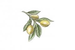 Lemons-art_001
