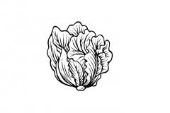 Lettuce-art