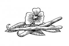 Vanilla-art