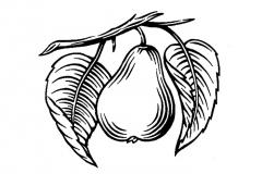 pear_icon