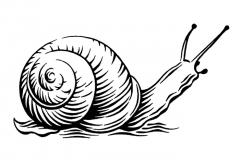 snail_icon