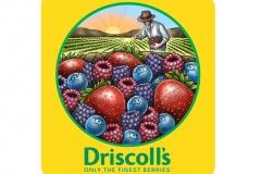 Driscoll_s_logo