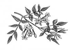 Bois-Blanc-art
