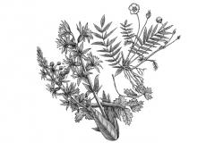 Botanical-Plant
