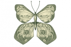 Financial_Butterfly