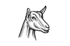 Goat-art