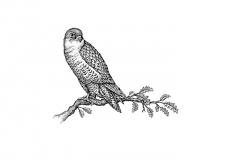 Hawk-Art