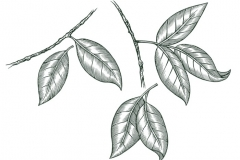 Leaves-art-