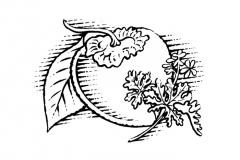 persimmon-rose-geranium