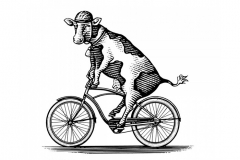 Cow-Bicycle-art