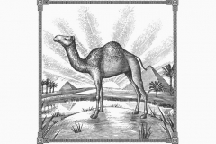 Camel_Egyption