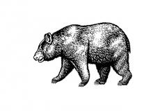 Bear-art--