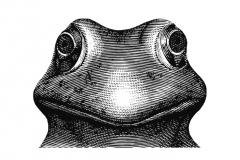 Frog-Art1