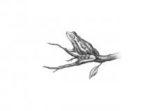 Frog_stock