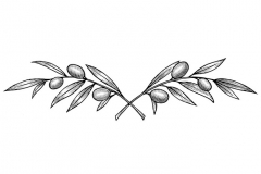 Olive-Branches