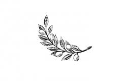 Olive-branch-stock