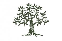 Olive-tree-001