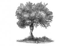 Olive-tree-art