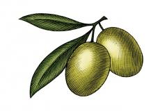 Olives_woodcut