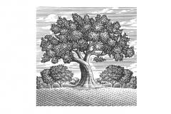 Orchard_Tree