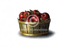 Organic-Apples-stock