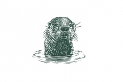 Otter-in-the-water