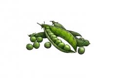 Peas-art