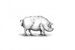 Pig-art-7