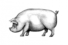 Pig_art
