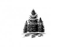 Pine-trees-comp