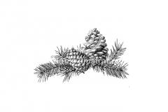 Pinecones_001